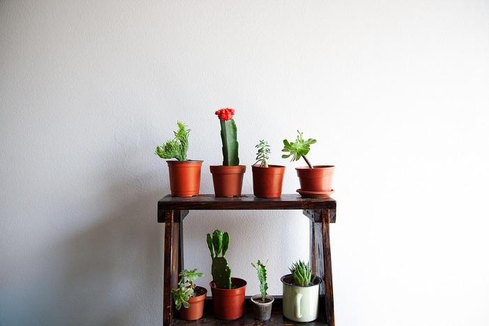 いろんな種類のある多肉植物。一つの鉢に一種類だけだと何だか寂しい気も…。そんな時にもぴったりなのが寄せ植えの方法です。育てやすく成長過程も似ている多肉植物は、寄せ植えにも最適な植物です。