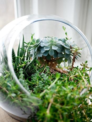 鉢植えよりも、インテリアとしてテーブルの上にも置きやすくおしゃれ度もグンとアップ♪