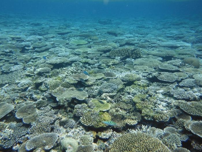 海中は、海底に広がる100種類以上もの珊瑚や、熱帯魚、海ガメ、マンタなど海中生物の楽園です。日射しを浴びた海面は鏡のように青い海の中を映し出し、幻想的で神秘的な光景が広がっています。