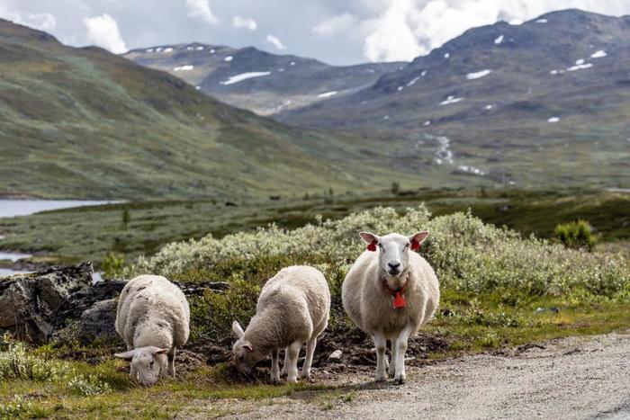ムートンとは羊の革のことです。吸湿性・放湿性に優れ、保温性も高いことで古来から防寒素材として重宝されてきました。 最近ではそのニュアンスを取り入れながら、よりリーズナブルに手に入れることができるフェイクムートンのコートも出てきています。お手入れも簡単なので気軽に着れちゃうのです。