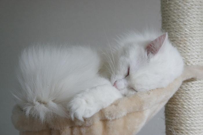 狭いところが好きな猫。このジャストフィットな感じがいいのでしょうね。