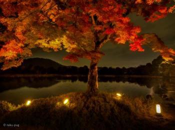夜になると、真っ赤なモミジが ライトアップされ、日中とはまた違った雰囲気に。