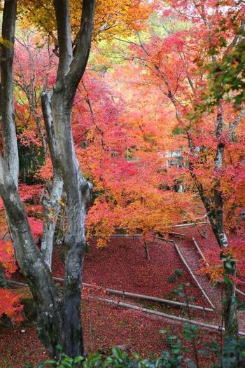 【本堂から眼下に見る紅葉。】 一人旅は、自分自身と向き合う時。 心静かな一時をもつのなら、北嵯峨の「直指庵」はお勧めの名所。