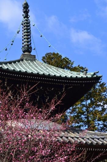 梅の花咲く頃の「多宝塔」。春は勿論、紅葉の季節は、格別の景色に。