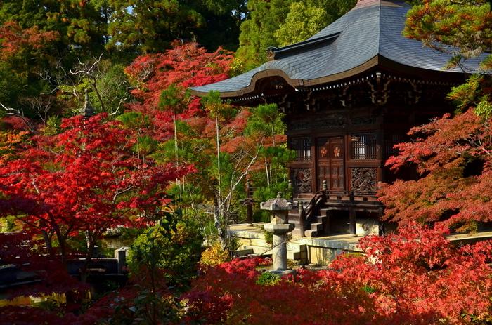 紅葉に彩られた「弁天堂」。堂の周囲は、池遊式庭園になっており、冬は雪景色に。  清涼寺は、「仁王門」や「多宝塔」の他、小堀遠州作と伝わる「方丈」前の庭園等もあり、見所が多い寺院です。ぜひゆったりと周ってみましょう。