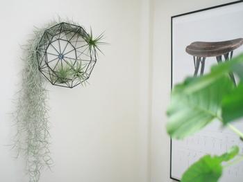 オブジェにもできる幾何学模様のカゴは、壁につけてエアプランツを飾るとおしゃれ!