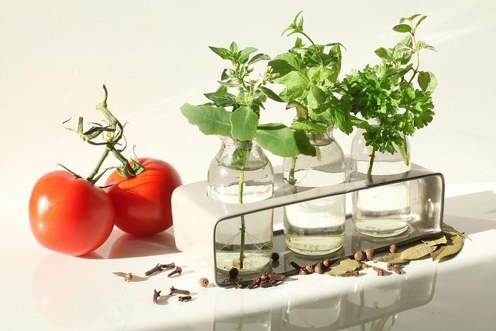 ミントやタイム、パセリなど、生命力の強いハーブも、水にさしておくだけで育ちます。