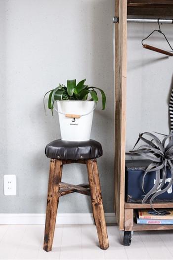 ちょうど良いサイズのバケツは観葉植物の鉢カバーにしてもおしゃれ。