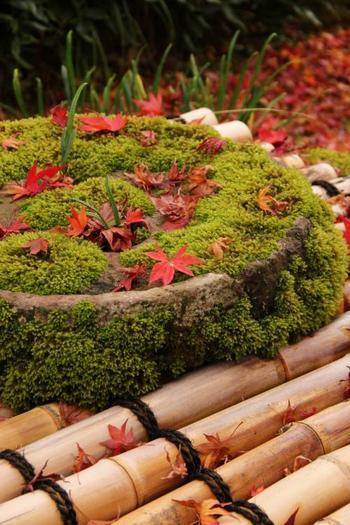 見所は、苔むす庭と紅葉。 特に緑の苔の上に落ちるモミジ葉の風情ある景色は格別。