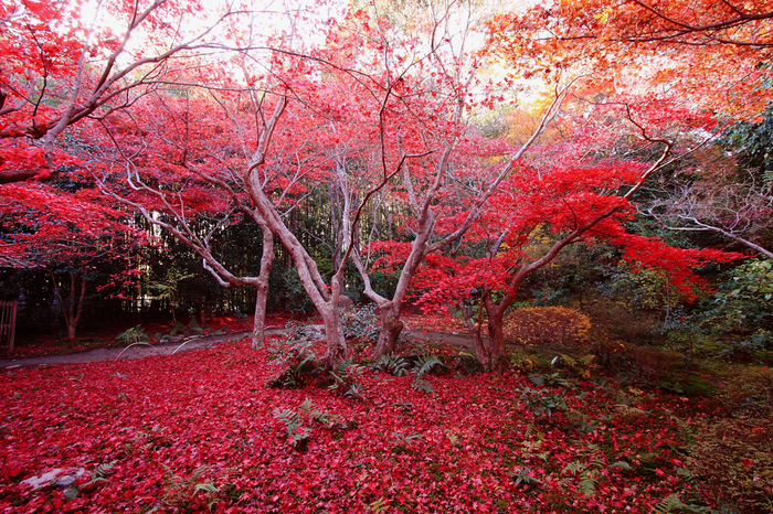 """深まる秋とともに、華やぐ散り紅葉。 """"静寂""""も「厭離庵」ならではの味わい。"""