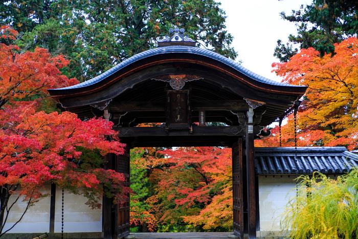 """「二尊院」は、嵯峨天皇の勅願によって慈覚大師円仁によって開山した寺院。一時期衰退しましたが、鎌倉期に法然上人らによって再興され、現在に至ります。【画像は、参道先に建つ「勅使門」。門を""""額縁""""に見立てて眺める景色も人気。】"""