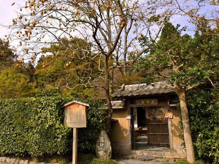 庵の名は、庭の柿が一夜にして落ちてしまった故事から付けられました。(『落柿舎の記』によると、都からの商人に柿を売る約束をしていたのだが、庭に40本ほどあった柿の木の実が、一夜の内にほとんど落ちてしまったと記されています。)