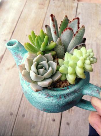 こちらは古びた急須を味のあるプランターに♪ ちょこんと植物がのぞく様は、なんだかちょっぴり微笑ましいですね。