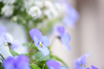 日当り具合をよく観察して、高さを調節して植物へ日を当てたり、日が当たり過ぎの植物を日陰に入れたりと植物が心地よく過ごせる環境を作りましょう。