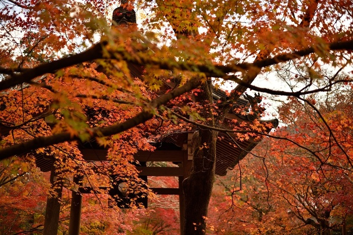 """「多宝塔」と「仁王門」がこの寺院の見所ですが、紅葉の季節なら何と言っても、山門から多宝塔まで続く""""紅葉のトンネル""""です。当地は、平安期から知られる紅葉の名所です。【画像は、「常寂光寺」の鐘楼】"""