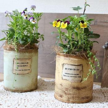 ビオラのようなお花との寄せ植えも可愛らしいですね。