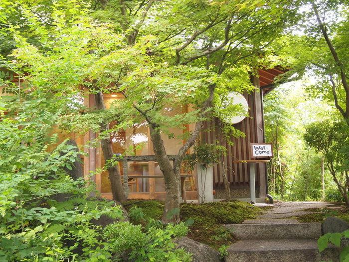 カエデやモミジに覆われた「さがの楓カフェ」。紅葉の頃は、赤や黄色に染まる嵯峨野で人気のカフェです。