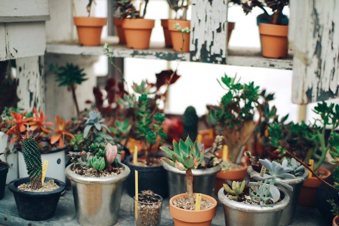 ソルソファームにいると、自分のお家にも植物を持ち帰りたくなります。オシャレなディスプレイや魅力的な植物たちは、インテリアとしてもオススメです。