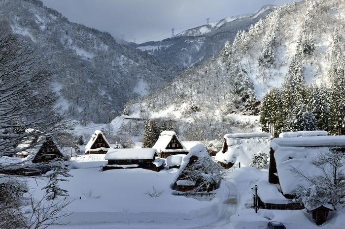 冬の《菅沼集落》。田んぼはすっかりと雪で覆われ、木々の枝にも、藁葺き屋根にも、しっかりと雪が降り積もります。