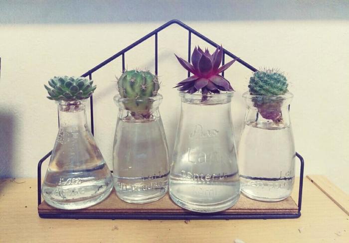 人気の多肉植物も土から水耕栽培へ切り替え可能です。お気に入りのガラスの入れ物を使って、爽やかに楽しんでみませんか?こんな風に窓辺に並べたらキレイですね!