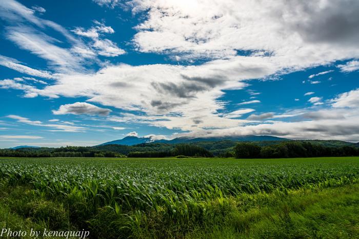 日本百名山の一つに数えられる斜里岳麓の清里町は、「斜里岳」「摩周湖」「神の子池」など様々な観光資源に恵まれた北海道有数の景勝地です。