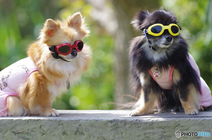 日焼けを引き起こす紫外線にはUVA(紫外線A)とUVB(紫外線B)の2種類があります。