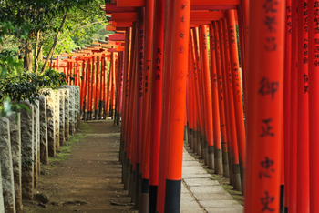 春にはつつじ祭りでにぎわう根津神社にもぶらりと散歩♪乙女稲荷にある千本鳥居も名物です。