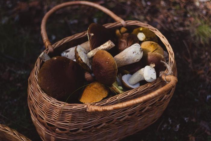 夏が過ぎれば、いよいよ食欲の秋。秋を迎えて美味しくなる食材の代表が「キノコ」です。最近は一年中食べられるキノコ類ですが、やっぱり旬は秋。旬のものを食事に取り入れることが、体にも良いと言われています。この秋は体に嬉しく、味も美味しいキノコ料理をご自宅で楽しんでみませんか?