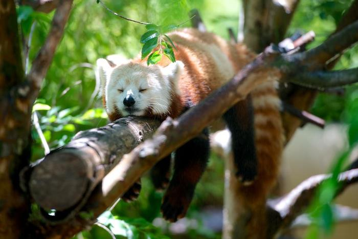 疲れた時は、寝るのが一番の薬です。眠れなくても、横になって脳と身体を休めてあげて。
