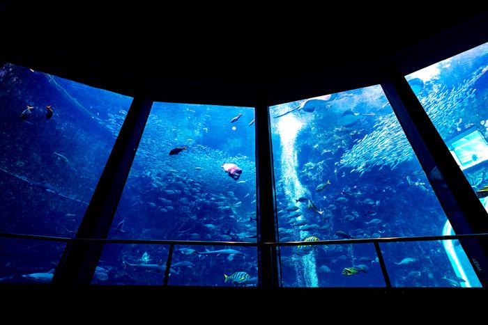 下田にある水族館、「下田海中水族館」は入り江に浮かんだ水族館で、自然を生かした水族館なんです。