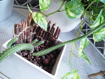 森で拾った小枝たちも、お行儀よく整列! つなげてから市販のプランターをぐるっと囲めば、あっという間におしゃれな小枝プランターに♪