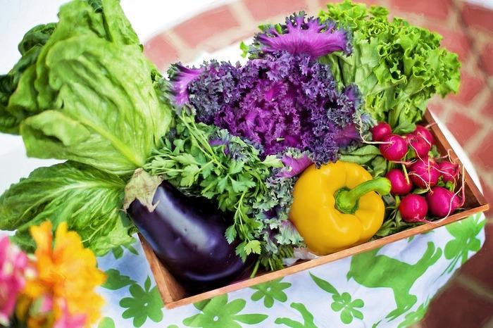 一つの畑に何種類もの野菜が栽培されていることから「七色畑」と呼ばれている鎌倉の畑。季節の野菜を始め、西洋野菜やハーブなども作られており、その品種の多さも鎌倉野菜の魅力の一つとなっています。