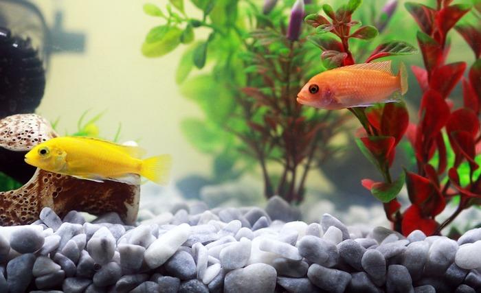 水温が安定してから、魚等の生き物を入れます。ベタやメダカなど、小型で幅広い環境に適応する丈夫な魚がおすすめです。