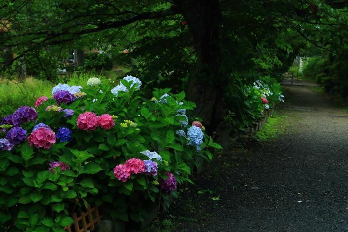 """「哲学の道」は、東山の「若王子橋」から「銀閣寺橋」まで、約2kmにわたる琵琶湖疏水支流に沿った散歩道。哲学者である西田幾多郎が、""""思索の場""""として散策していたことから、その名が付きました。"""