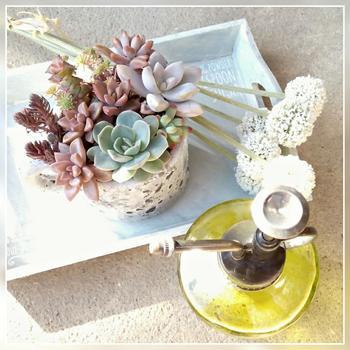 ちょっぴりフチがかけてしまったカップ&ソーサーも捨てずに再利用。室内で楽しめるキッチン菜園やリボベジにもおすすめです。底穴がないので、小石などを底に敷いて、水のやり過ぎにも気をつけてくださいね。