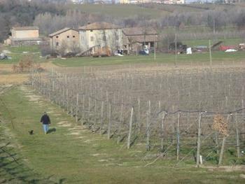 バルサミコ酢は、甘味の強いぶどうの果汁を原料にした果実酢の一種。北イタリアのモデナ地方で1000年以上前から作られています。「バルサミコ」とはイタリア語で「香りのある」という意味。