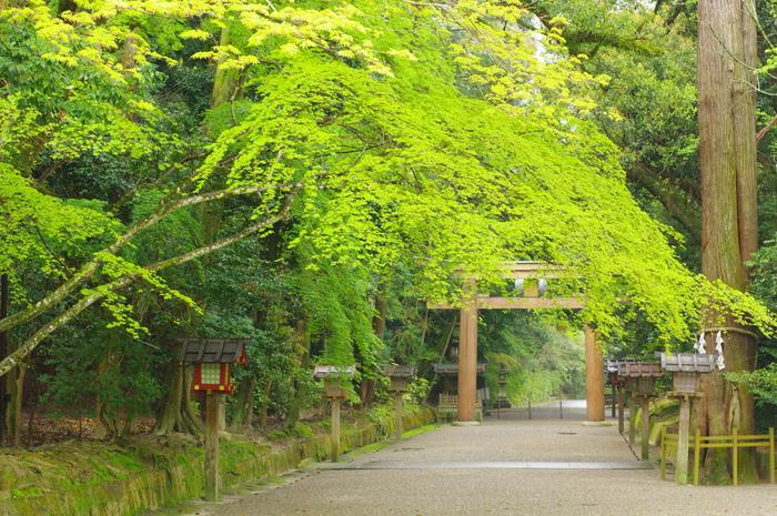 高さ7メートル、横幅10メートルの大鳥居は、神域への入り口です。緑のトンネルのような参道と、檜造りの鳥居のコントラストは美しく、どの角度から見ても絵になります。