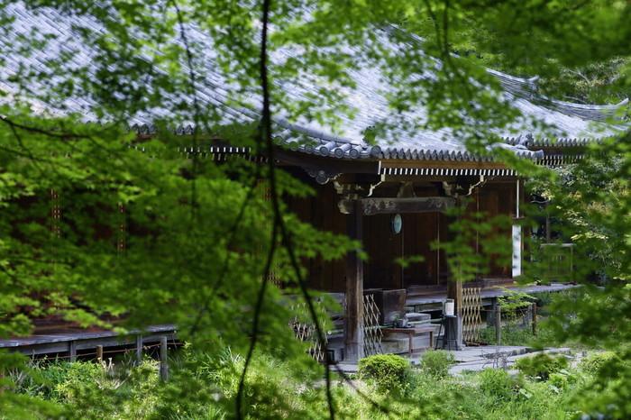 紫陽花の見頃は、例年6月上旬から7月上旬頃。天気の良い日なら、青もみじの名所「浄瑠璃寺」参詣と合わせてのハイキングがおすすめです。「岩船寺」から「浄瑠璃寺」間は、車で5,6分、歩いて30分程度です。【画像は「浄瑠璃寺」】