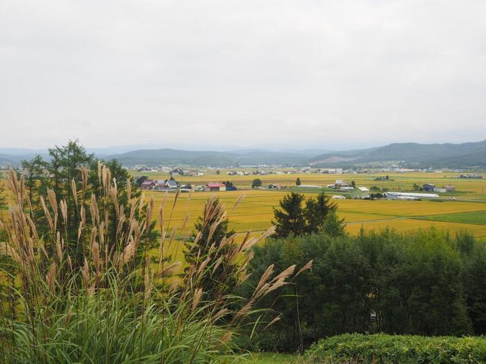 天然水を使って作られるお米や作物は、当然美味しいわけです。お米も北海道の地域で味が変わります。