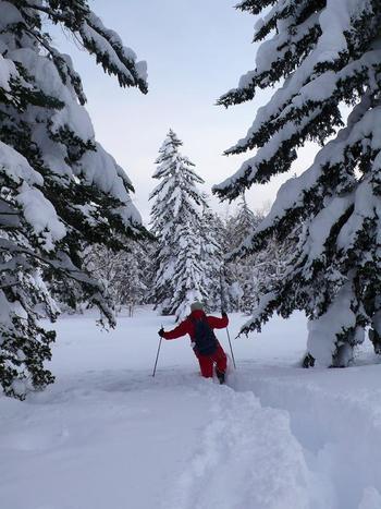冬は歩くスキーやスノーシューで真っ白な世界をゆっくり周遊するのも良いですね。
