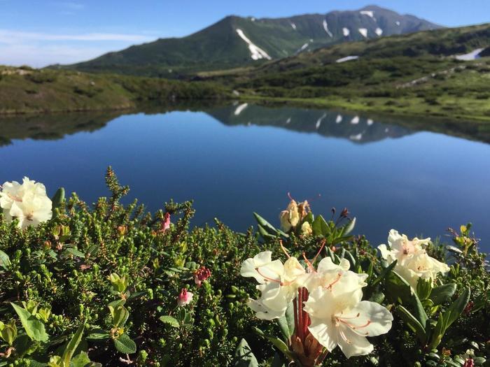 春から夏にかけては珍しい高山植物や新緑の山々、秋には色とりどりの紅葉など、季節ごとの自然景観に恵まれています。
