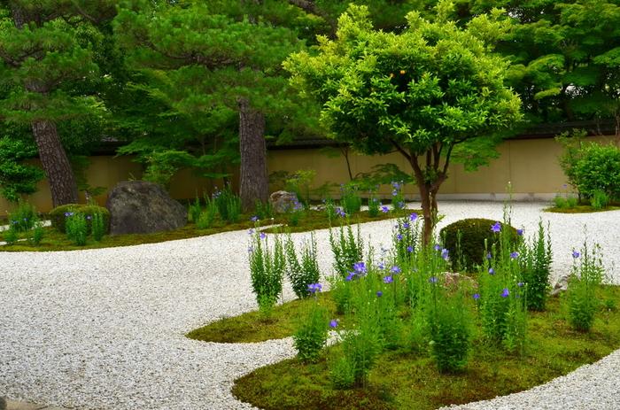 庭園は、平安絵巻を眺めるような雅で清々しい眺め。白砂敷き詰められ、絵巻物の雲を象った苔の上には、紫式部の名にちなんだ紫の桔梗が植えられています。  涼やかで凛とした花姿と、枯山水の取り合わせは、紫式部の才気さえも感じさせる美しい花景色です。一人静かな時を過ごした方にお勧めの名所です。
