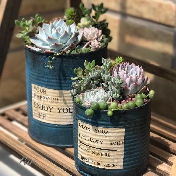 お気に入りの缶を並べても◎ 外国風のパッケージだと、鉢に入れるよりも素敵!