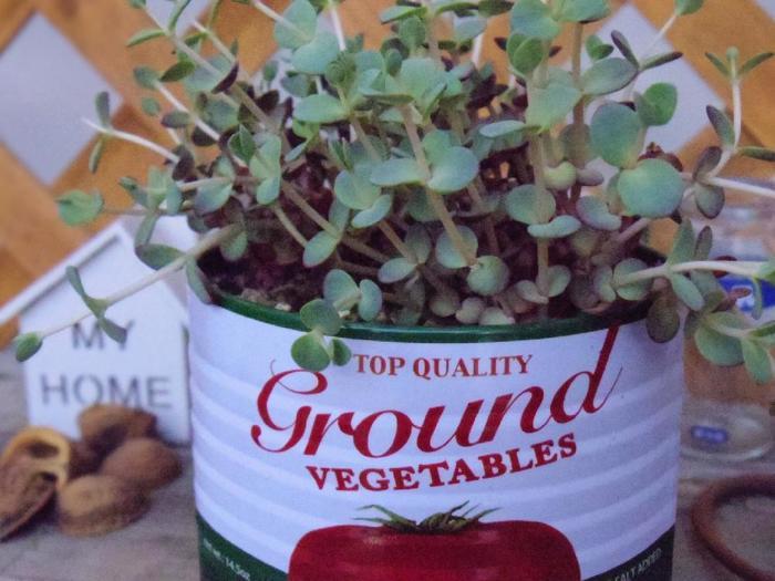 ちょっと大き目の缶を使えば中身もアレンジできる。寄せ植えにしても素敵です!