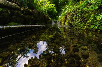 六郷湧水群の水は、地元の人にも愛される、銘水。 川底までしっかり見える、透明度の高さが清らかさの証です。