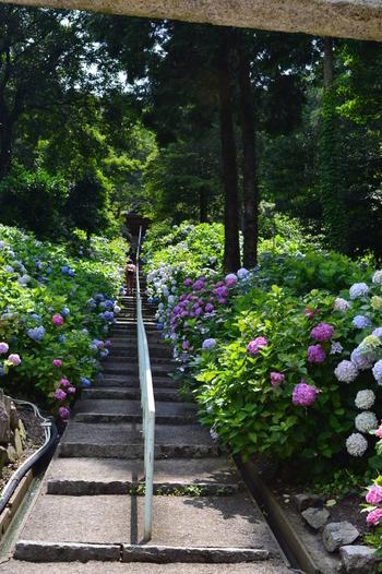 【吉備文化の基礎を築いたと伝わる山陽屈指の大社「吉備津神社」。長い回廊と、紫陽花でも有名。】