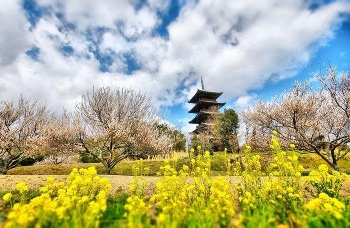 """【岡山県民が愛する""""吉備路""""の風景。水田に映るのは「備中国分寺」の五重塔。】"""