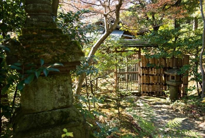 年季が入った広葉樹の林内はとても静か。青山とは思えません♪