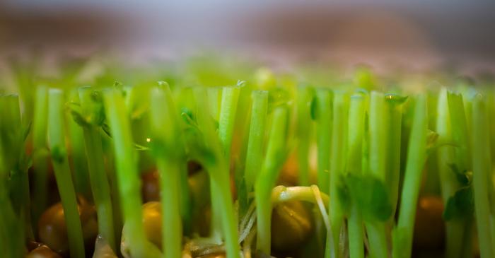 捨てちゃう前に!水につけると再生する野菜『リボベジ』生活のススメ