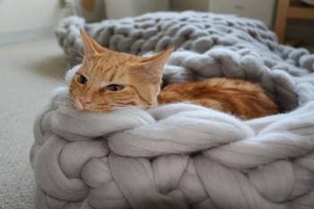 こちらは、ふかふかのペットベッド。猫ちゃんもぬくぬく暖かそう♪